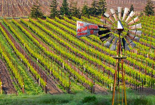 Vineyard property Sonoma County