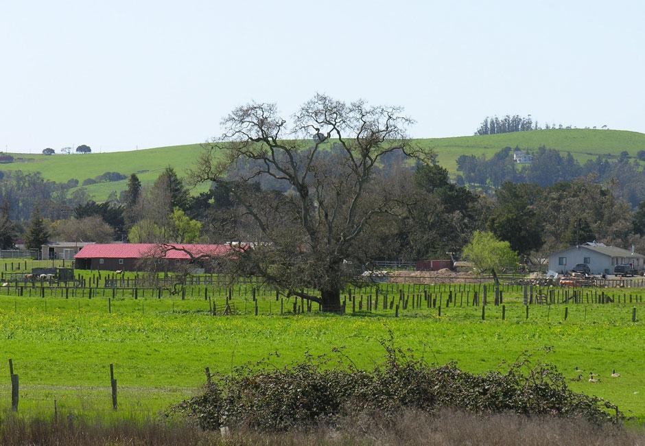 Azevedo Ranch