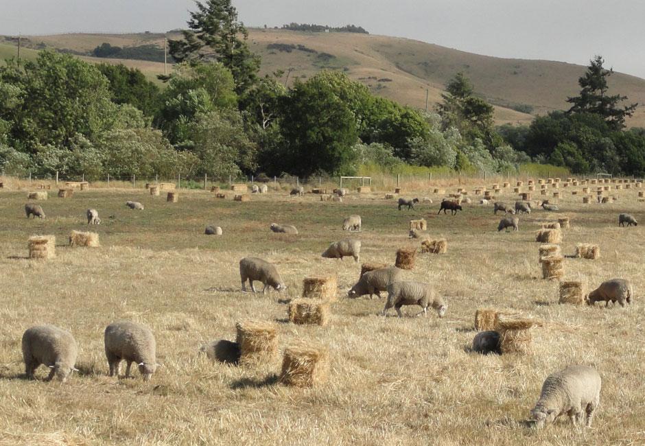 Bodega Ranch
