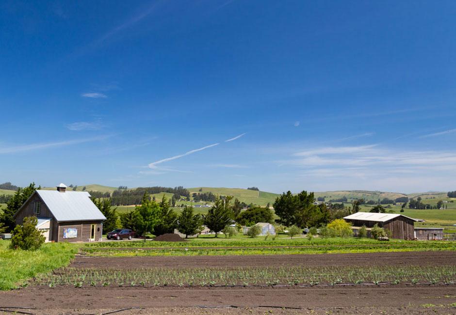 Tomales Road Ranch